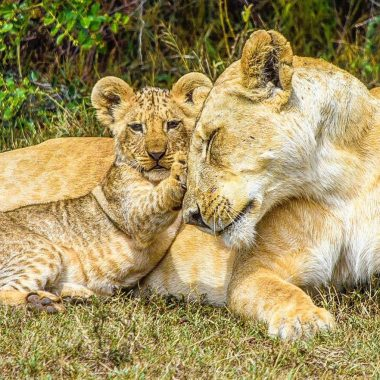 Sadie spotted a lioness with her tiny cubs while staying at Solio