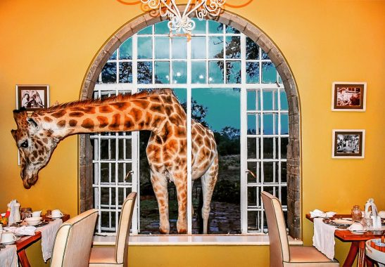 A giraffe cranes its head through the breakfast room