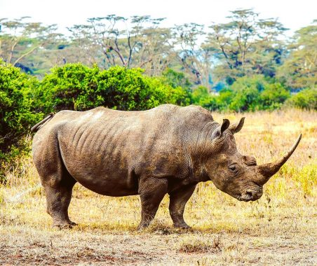 Solio is home to a healthy rhino population